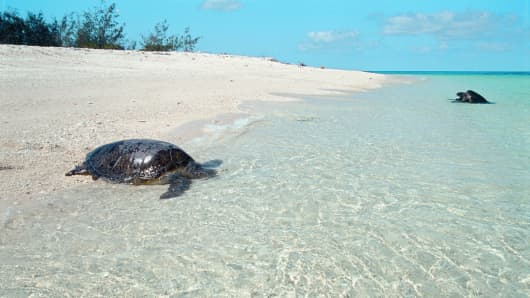 Wilson Island in the Great Barrier Reef is a nesting location for the vulnerable Green Turtle and Loggerhead Turtle.