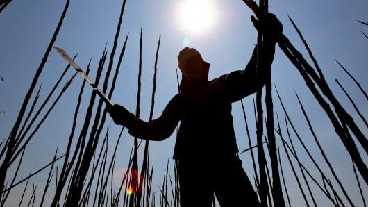 A worker cuts sugarcane with a machete in Brazil.
