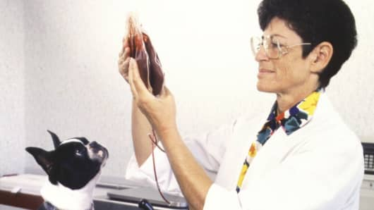 Pat Kaufman, director of Animal Blood Resources International, started collecting donated blood in 1988.