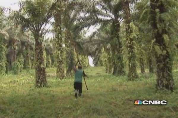 The politics of palm oil