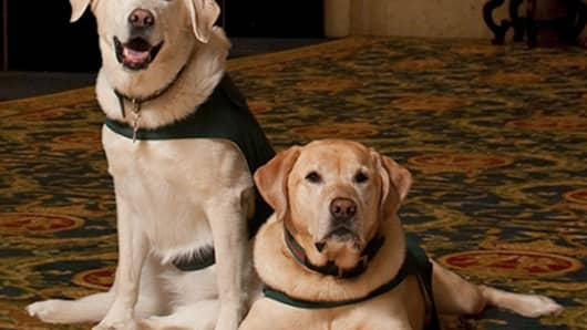 At the Fairmont Hotel Vancouver, guests can take Mavis, a Lab/Retriever mix or Beau, a Yellow Labrador, for a walk.