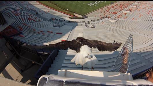 "Auburn University's ""The War Eagle"" wearing a Tagg device."