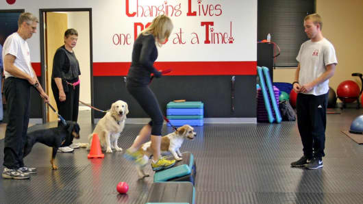 At K9 Fit Club people and pets work out together. Exercise classes are designed to give both dogs and their owners a cardio workout and strength training.