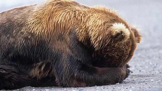 bear hiding