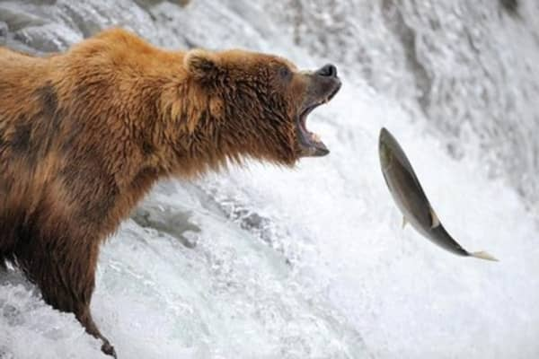 Tech stocks in bear territory