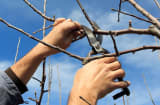 Trimming tree braches
