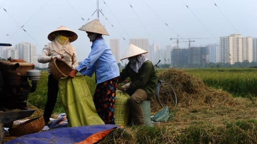 Farmers harvest rice on a field next to residential buildings on the outskirts of Hanoi on October 13, 2014.