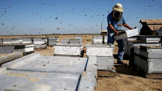 Gene Brandi of Gene Brandi Apiaries carries a bee hive in Los Banos, California.