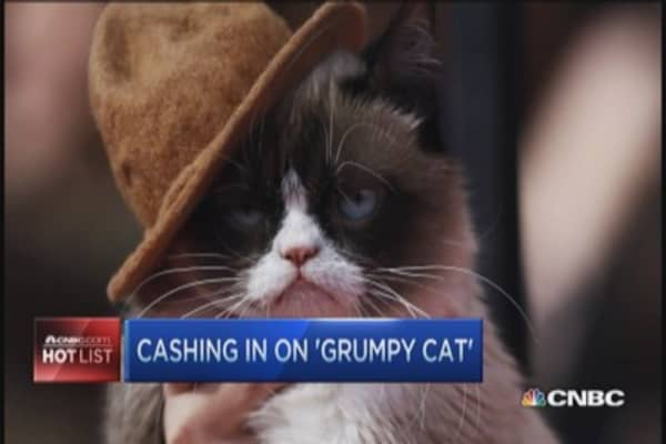 The 'Grumpy cat' empire