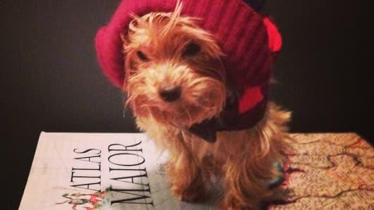 Munchy the Pooch | Instagram: @munchythepooch