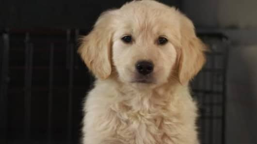 GoDaddy's lost puppy gets booted from the Super Bowl ad lineup.