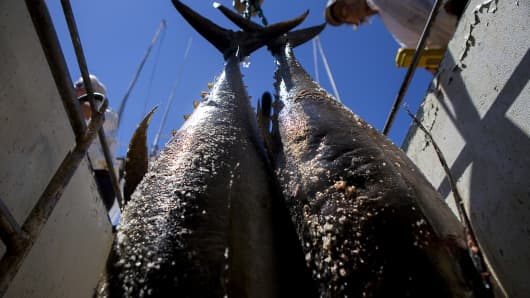 Yellowfin Tuna Pacific