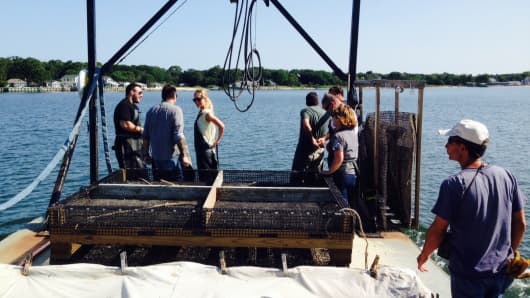 Elly Truesdell, center, working on an oyster barge in Jamesport, NY, with the Eastern Bays Shellfish Co.