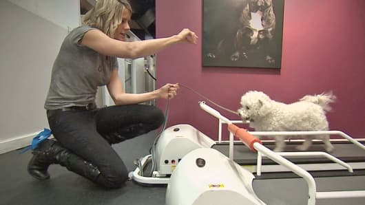 D Pet Hotels Chelsea co-owner Kerry Brown assists  a guest with a treadmill workout at the hotel's gym, appropriately known as Pant.
