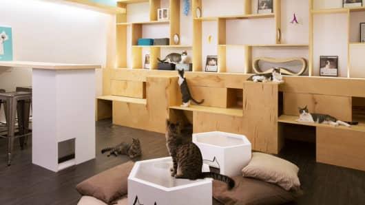 Interior of Meow Parlour