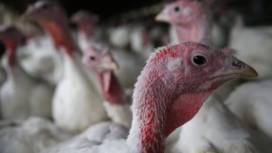 The worst bird flu outbreak in U.S. history is taking a toll on the turkey industry.