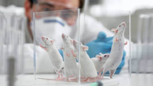 Mice in science lab