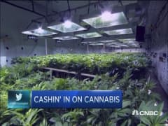 Cashing in on cannabis