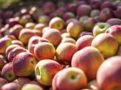 A record crop of apples in Washington State has forced growers to dump their surplus.