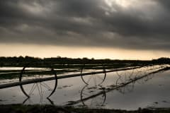 Farm irrigation equipment stands idle in the flooded fields after a storm dropped 2 inches of rain on Raymondville, Texas.