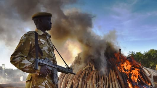 A KWS security officer stands near a burning pile of 15 tons of elephant ivory seized in Kenya at Nairobi National Park on March 3, 2015.
