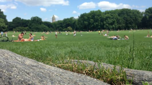 Sheep Meadow in Central Park is a mixture of four types of turfgrass.