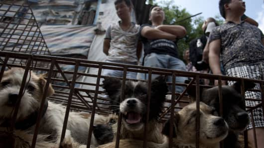Vendors wait for customers to buy dogs in cages at a market in Yulin, in southern China.