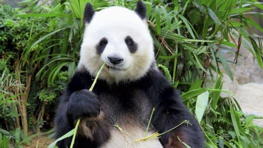 Panda bear market