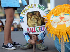Cecil the lion trophy kill protests
