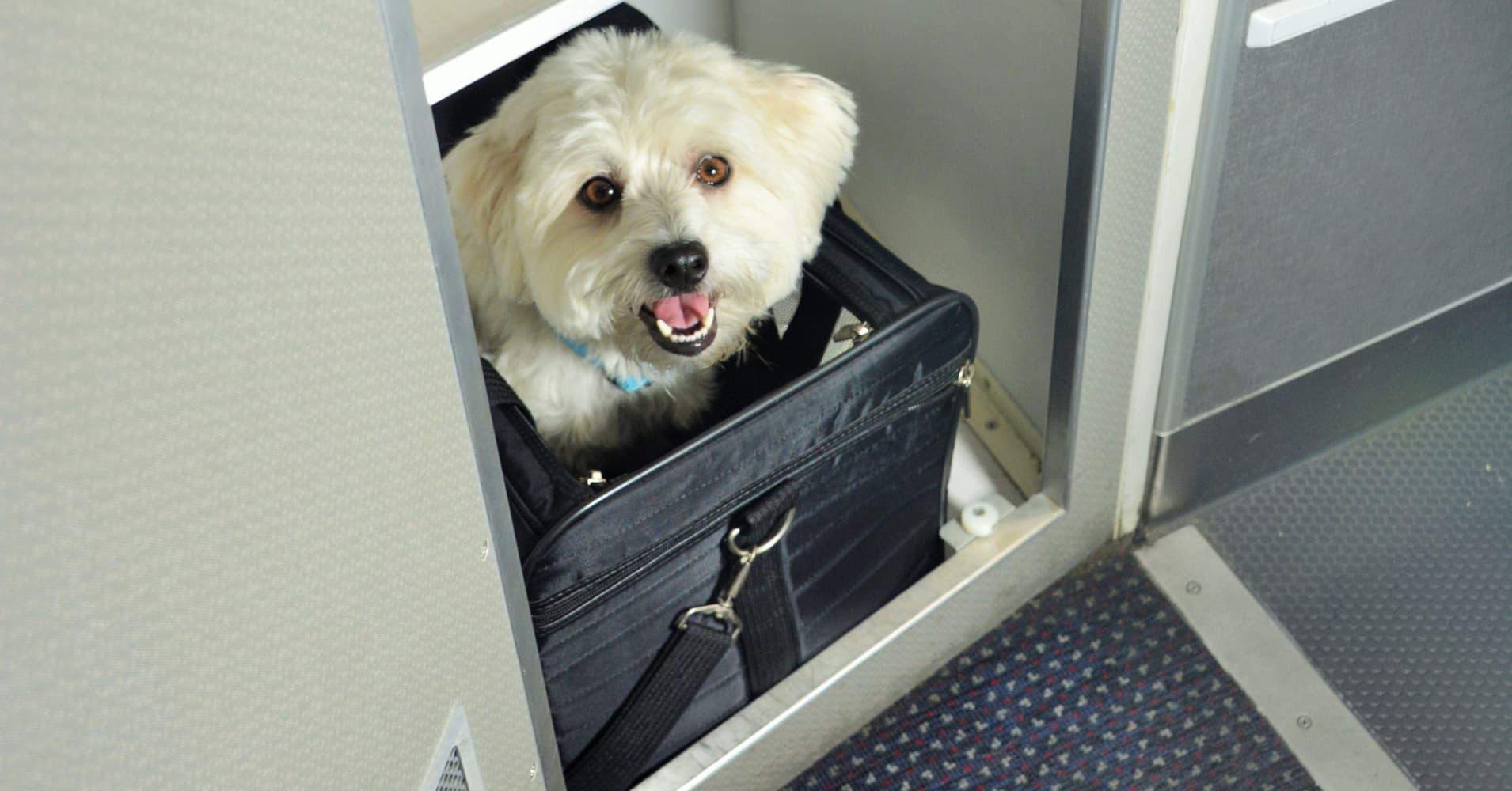 Pets begin flying the friendly skies on some planes for Best airline to fly dogs