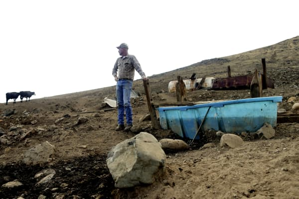 Rancher Steve Drumright looks toward his cattle, grazing on a barren hillside outside of Porterville. Drumright's herd searches the parched Tulare County hills for dwindling vegetation as the drought lingers.
