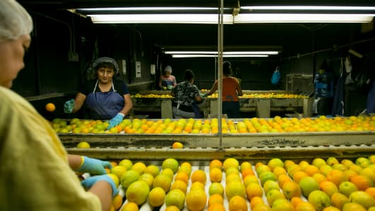 Workers sort citrus at a packing house in Tulare County. California farms and ranches received $46.4 billion for their output in the 2013 crop year, according to the USDA.