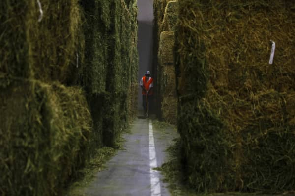 U.S. hay producers exported around 911,000 metric tons of hay valued at more than $290 million in 2014, according to UC Davis estimates. Already from January to July 2015, U.S. hay export volumes to China have gained 30 percent, with hay export values near 50 percent higher than the same period a year ago.