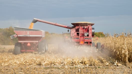 A farmer harvests corn in Burlington Iowa.
