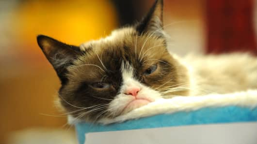 Grumpy Cat's company has filed a lawsuit against Grenade Beverage LLC
