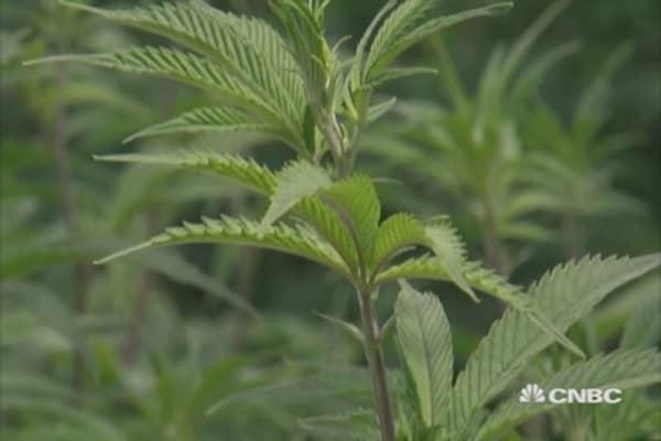 New York's medicinal marijuana companies ready to open