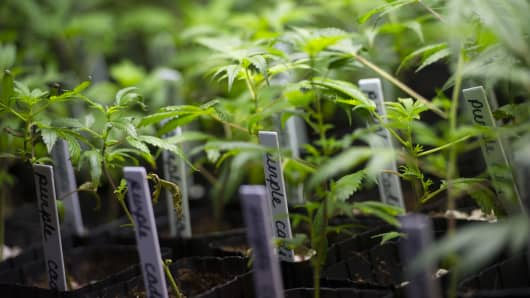 Five licenses have been issued to businesses in NY State to operate medical marijuana dispensaries.