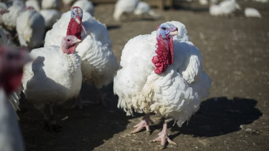A bird flu outbreak affecting turkeys has been reported in Dubois County, Indiana on Jan. 15th, 2016. (File photo).