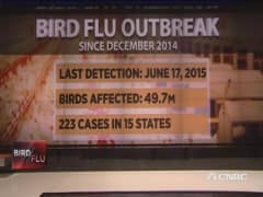 New strain of bird flu spreads across Indiana farms