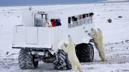 Tourist on a day trip to watch polar bears get a close up encounter in Manitoba, Canada.