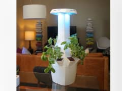 ROOT's indoor smart garden