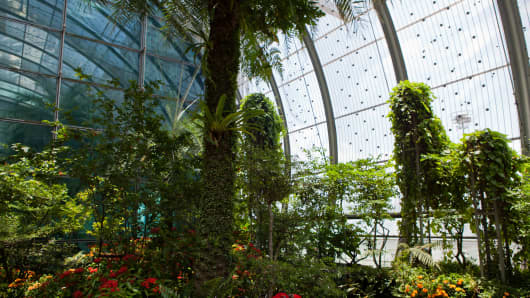 Changi Airport's butterfly garden is home to more than 1,000 free flying butterflies. Close to 50 butterfly species native to Singapore and Malaysia were specifically selected to be bred in the garden.