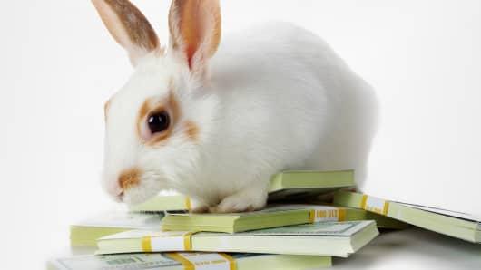 Bunny Market.