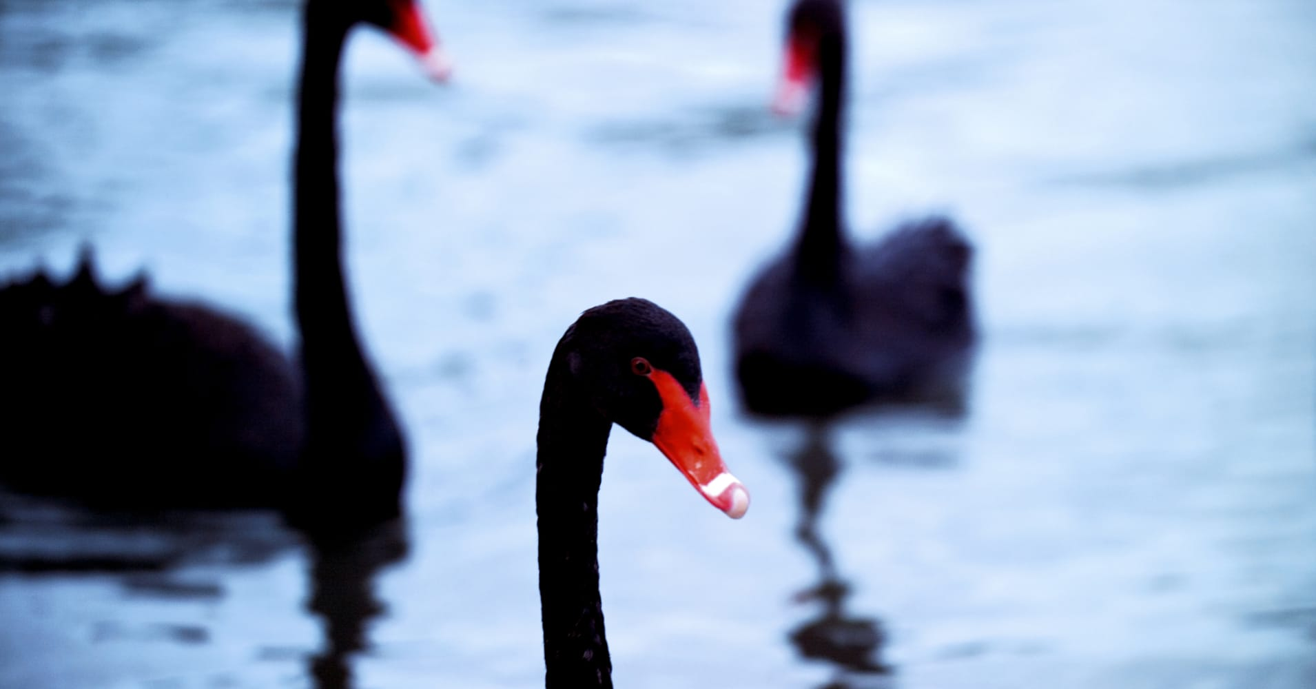 These are the 39 black swans 39 socgen thinks you should worry about