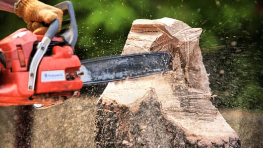 Sawing down tree