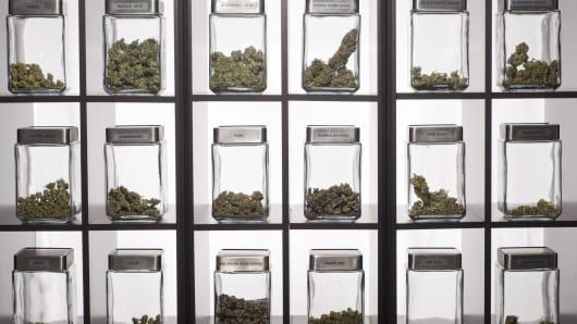 Medical grade marijuana display at dispensary in Denver, Colorado.