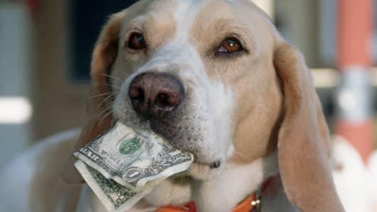 Dog eats money