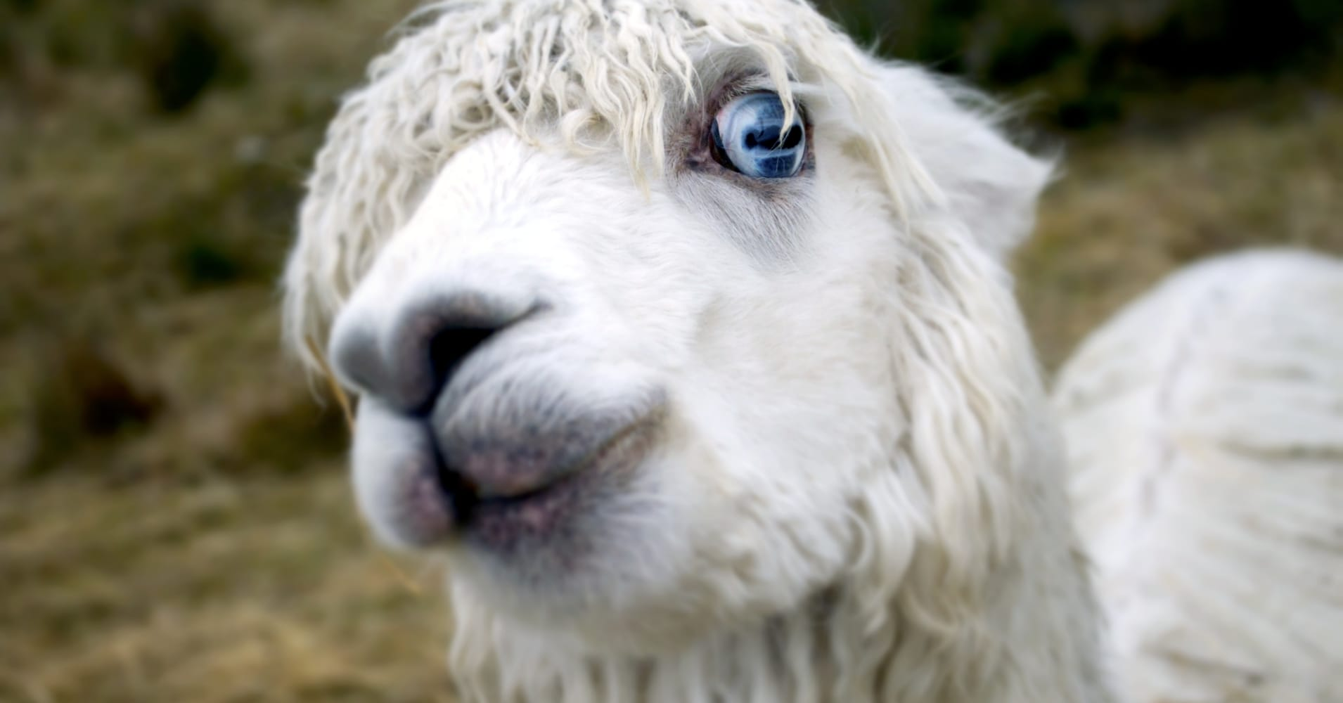 No, you can't expense that llama and other wacky claims