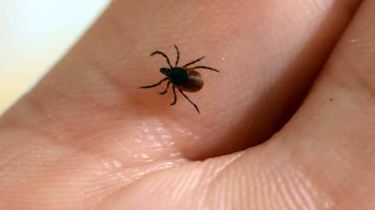 Lyme disease is caused by the bacterium Borrelia burgdorferi and is transmitted to humans through the bite of infected blacklegged ticks.
