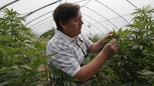 Jim Hill looks over the marijuana he grows for medical purposes at his farm in Potter Valley, Calif. Hill believes passionately in marijuana's purported ability to treat the symptoms of diseases ranging from cancer to Alzheimer's.